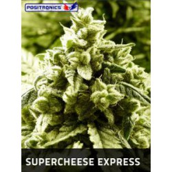 SUPER CHEESE EXPRESS AUTO